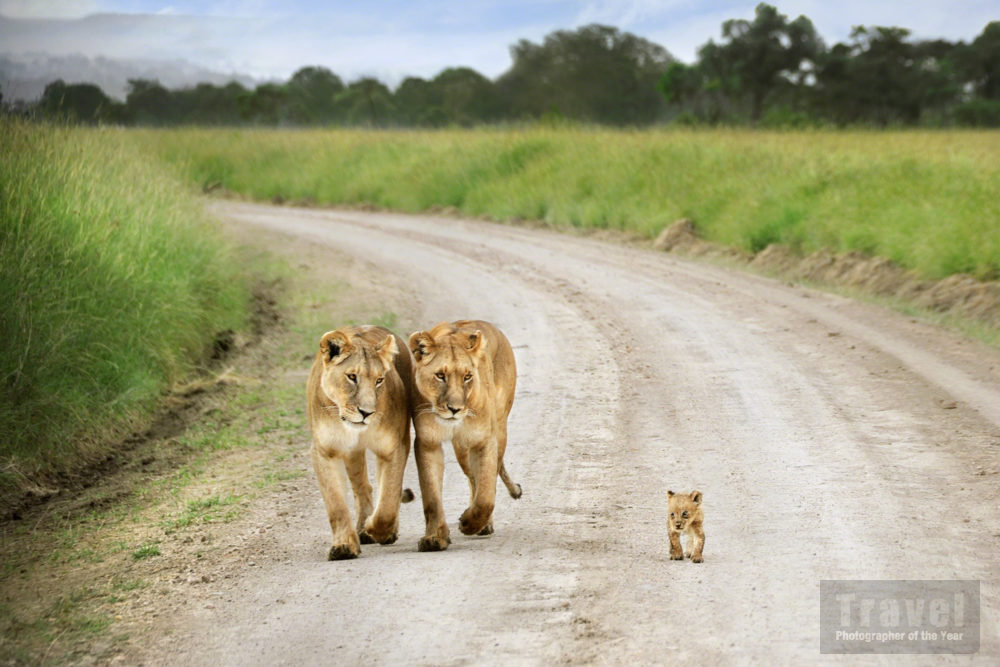 That little lion…