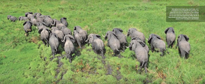 Through my eyes: the journey of a wildlife veterinarian